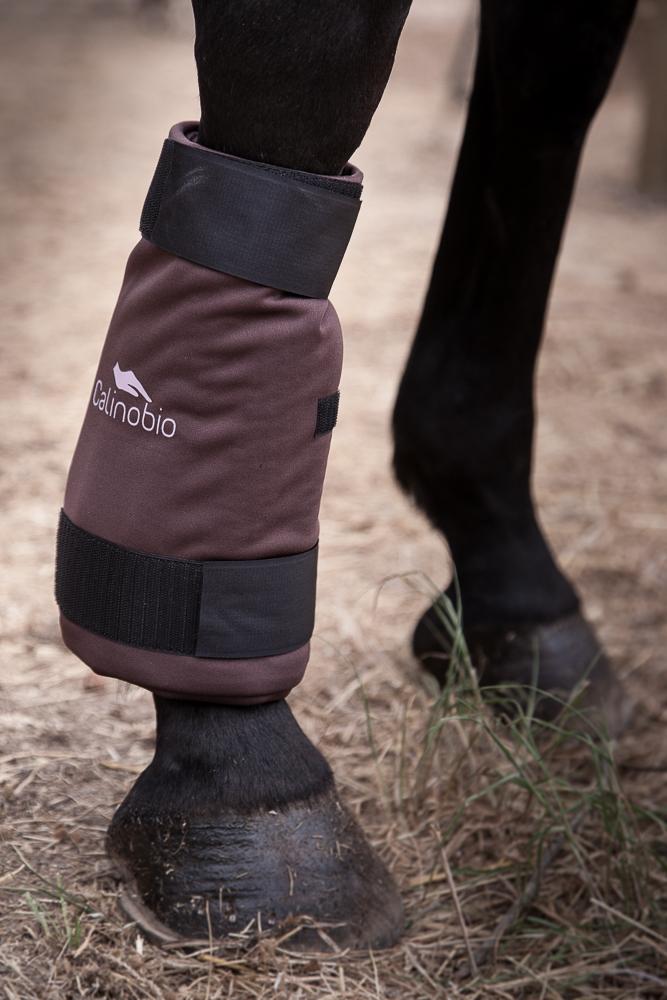 Compresse rafraichissante naturelle pour chevaux