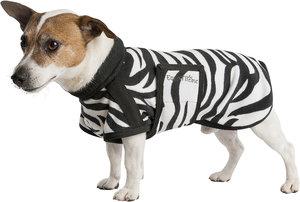 Couverture chien Zèbre equi-theme