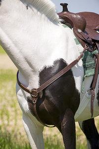 "Collier de chasse western RANDOL'S ""Topeka"""