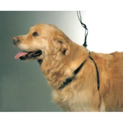 harnais pour chien easy-walker