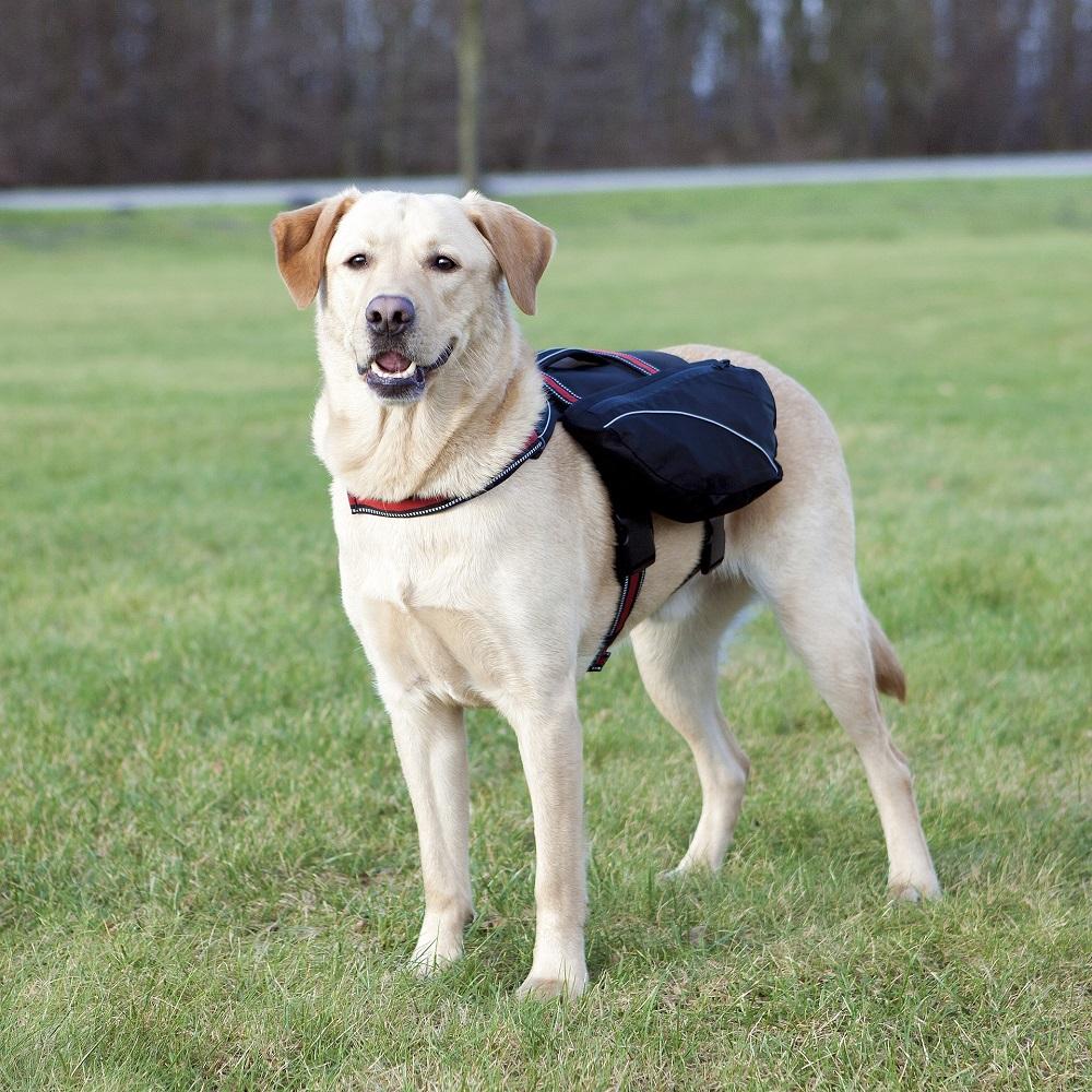 Sac à dos pour chiens New design