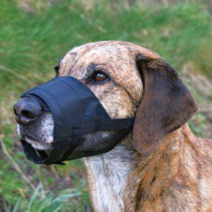 Muselières pour chien