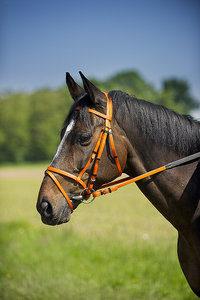 Destockages matériels cheval