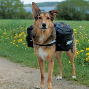 Accessoires divers pour chiens