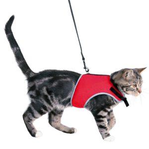 Destockage Accessoires pour chats